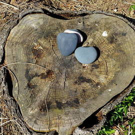 Kathy Barney - Sticks and Stones