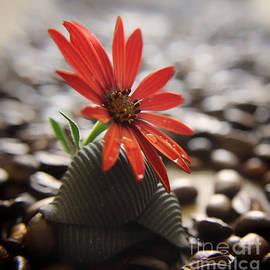 Still life with flower