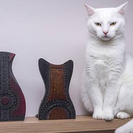 Vyacheslav Isaev - Stillife with cat
