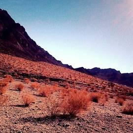 Leena Ascencio - Stillness of the Desert