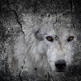 Steve McKinzie - Stone Wolf Graffiti