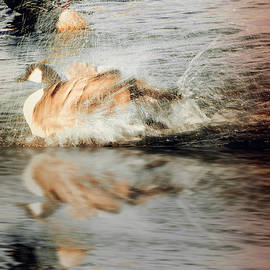 Bobbee Rickard - Stop Splashing II
