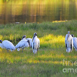 Al Powell Photography USA - Storks at Sundown