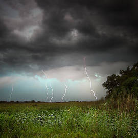 Mark Andrew Thomas - Storms in the Everglades