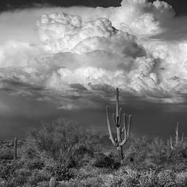 Saija  Lehtonen - Stormy Desert Skies in Black and White