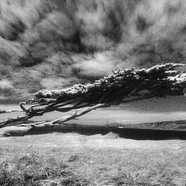 Daniel Furon - Stormy Promise