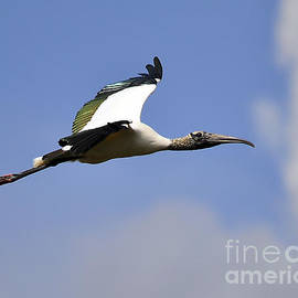 Al Powell Photography USA - StratoStork