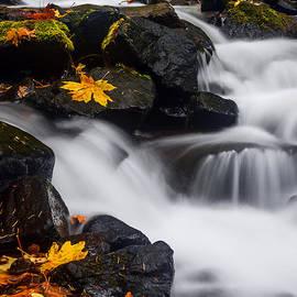 Vishwanath Bhat - Stravation Creek in Autumn