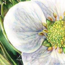 Shana Rowe - Strawberry Blossom