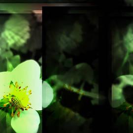 Raquel Ventura - Strawberry Flower