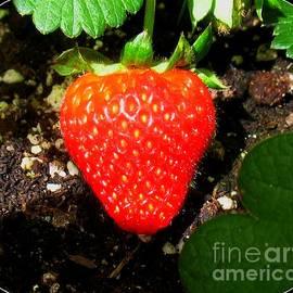 Patti Whitten - Strawberry