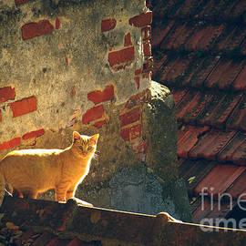 Carlos Caetano - Stray Cat
