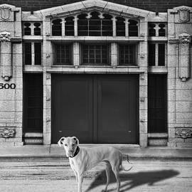 Larry Butterworth - Street Dog