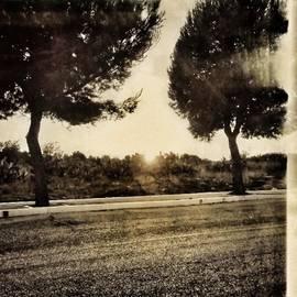 Michele Stuppiello - #street #road #viale #alberato #alberi