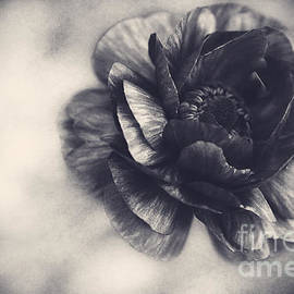 Emily Kay - Striking in Black and White