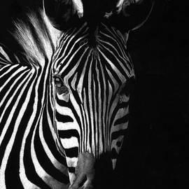 Sheryl Unwin - Striped Beauty