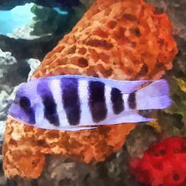 Susan Savad - Striped Tropical Fish Frontosa