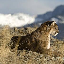 Wildlife Fine Art - Strong Instinct