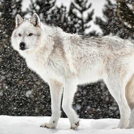Athena Mckinzie - Strudding The Winter Coat