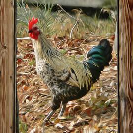 Barbara St Jean - Studio Window Rooster