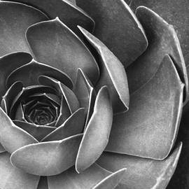 Ben and Raisa Gertsberg - Succulent In Black And White