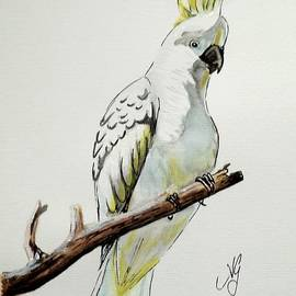 Anne Gardner - Sulphur crested cookatoo