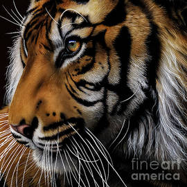 Jurek Zamoyski - Sumatran Tiger Profile
