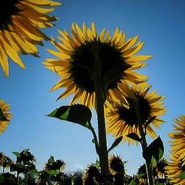 Colette V Hera  Guggenheim  - Summer Field