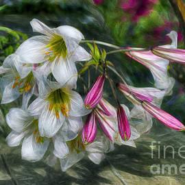 Ian Mitchell - Summer Lilies