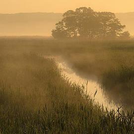 James Clavet - Summer marshland