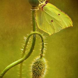 Jaroslaw Blaminsky - Summer Poppies