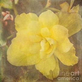 Arlene Carmel - Summer Sunshine