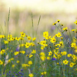 Saija  Lehtonen - Summer Wildflowers on the Rim