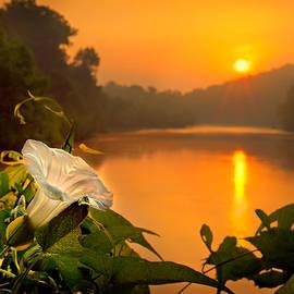 Robert Charity - Sun And Flower