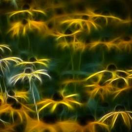 Timothy Bischoff - Sun Dancers