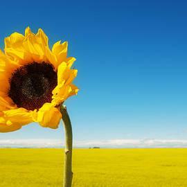 Lisa Knechtel - Sun Drenched Dreams