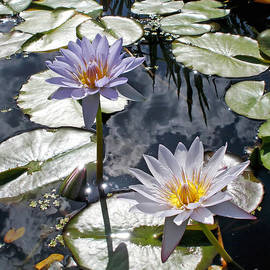 Kaye Menner - Sun-drenched Lily Pond