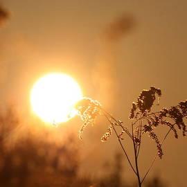 Neal  Eslinger - Sun God