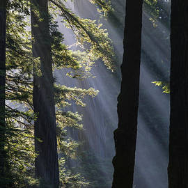 Vishwanath Bhat - Sun rays at Redwood National Park