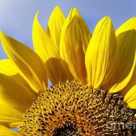 Benanne Stiens - Sun Riser