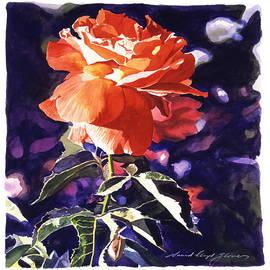 David Lloyd Glover - Sun Rose