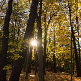 Georgia Mizuleva - Sun Spotting Autumn - a Peaceful Forest in the Fall