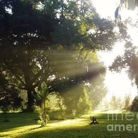 D Hackett - Sunbeam Landscape