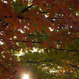 Andrew Soundarajan - Sunburst through the Leaves