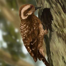 Irwan Iskak - Sunda Pygmy Woodpacker