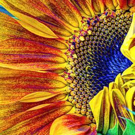 Heidi Smith - Sunflower Abstract