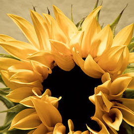 Alejandro Reyna - Sunflower
