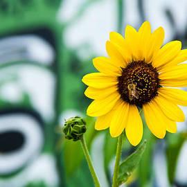 Mark Weaver - Sunflower And Graffiti