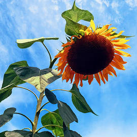 Susan Savad - Sunflower and Sky