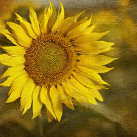 Ivelina G - Sunflower and Sunshine